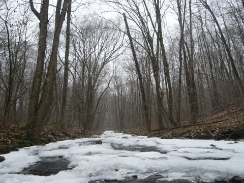 Icy Stream Flows Through The Trees
